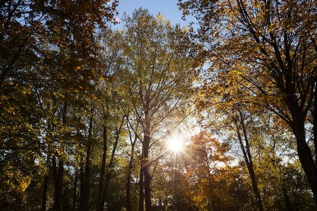 Bäume mit vergilbten blättern im herbstpark im sonnenlicht. fotografiert gegen einen blauen himmelhintergrund. Premium Fotos