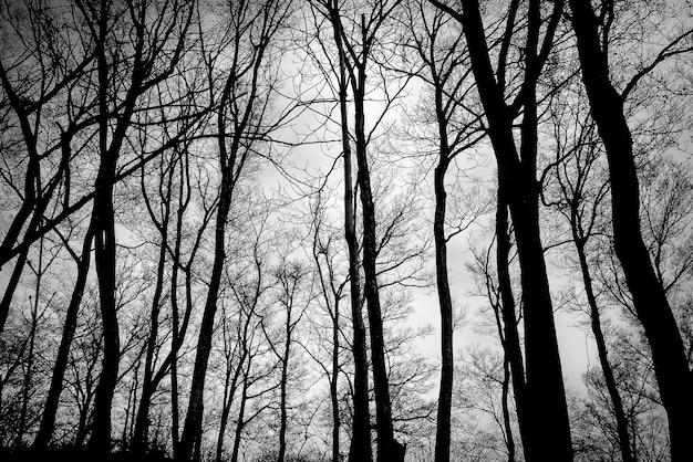 Bäume ohne blätter Kostenlose Fotos