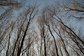 Bäume schuss nach oben Kostenlose Fotos