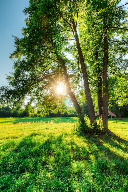 Bäume von eichen in einem feld mit grünem gras und sonne bei sonnenuntergang Premium Fotos