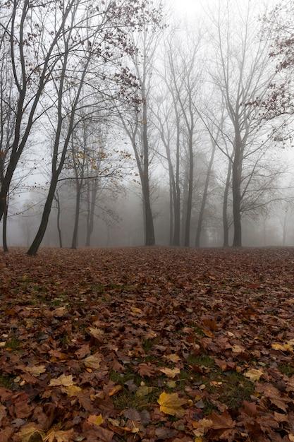 Bäume wachsen auf einem hügel. die bäume trocknen blätter. auf dem gras sind braune laubblätter. nebel. herbst. fotografierte nahaufnahme. Premium Fotos