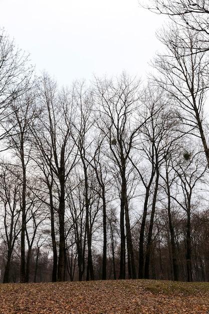 Bäume wachsen im park in der herbstsaison. Premium Fotos