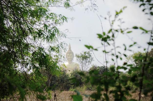 Bambusbaum von buddha-hintergrund. Premium Fotos