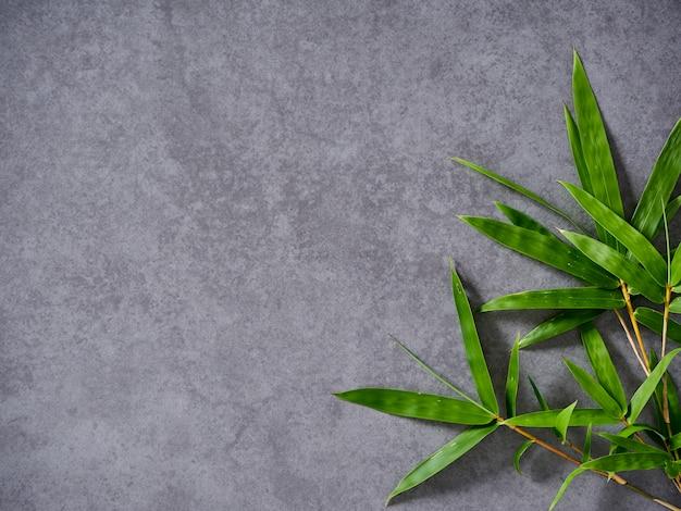 Bambusblätter auf grauem hintergrund. Premium Fotos