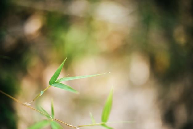 Bambusblattniederlassungshintergrund Kostenlose Fotos