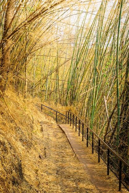 Bambustunnelbahn-naturlehrpfadhintergrund Premium Fotos