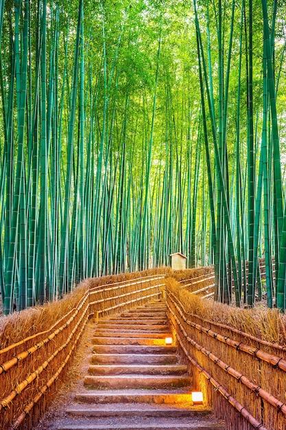 Bambuswald in kyoto, japan. Kostenlose Fotos