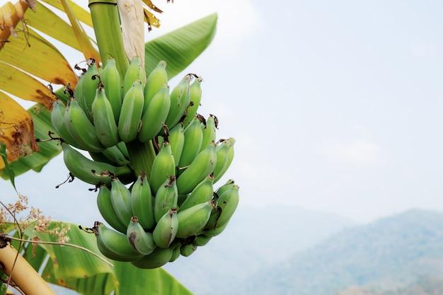 Banane mit dem himmel. Premium Fotos