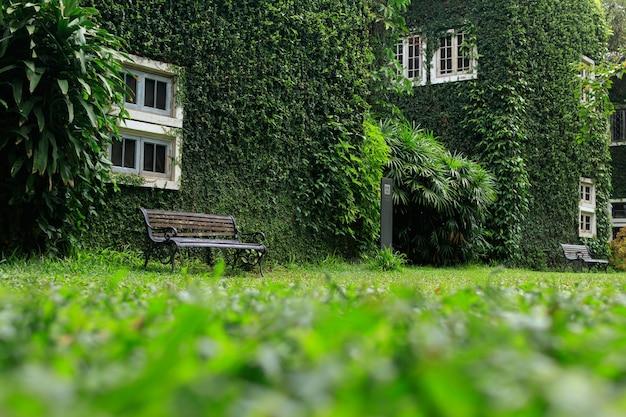 Bank im park und wände mit grünen reben Premium Fotos
