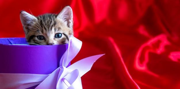 Banner mit platz für text. gestreiftes kätzchen späht aus der geschenkbox auf rotem hintergrund. geburtstag und feiertag Premium Fotos