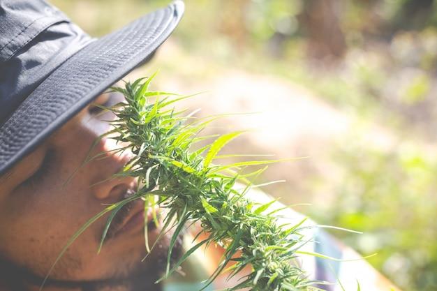 Bauern halten marihuana (cannabis) bäume auf ihren farmen. Kostenlose Fotos