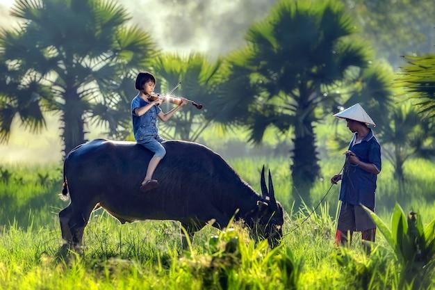 Bauernmädchen spielt violine auf büffel mit papa sorgfalt eng. Premium Fotos