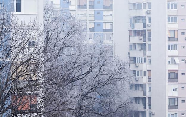 Baum bedeckt im schnee mit einem wohnhaus auf dem in zagreb in kroatien Kostenlose Fotos