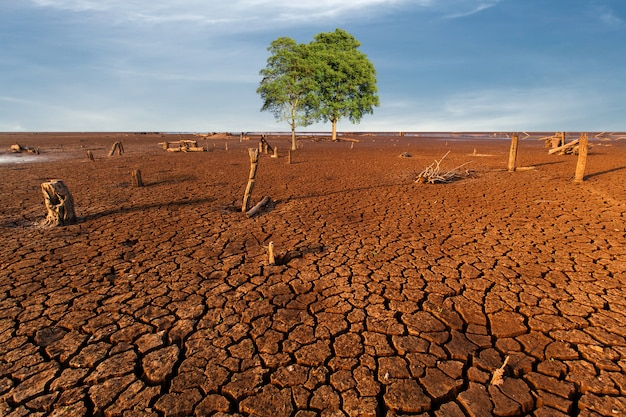 Baum gebrochenes trockenes land ohne wasser. zusammenfassung. Premium Fotos