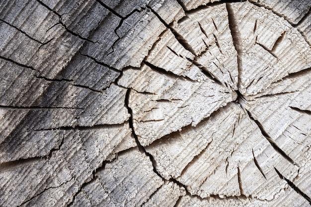 Baum graue textur Premium Fotos