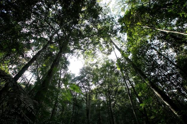Baum im wald am berg auswählen fokus dunkel oder wenig licht Premium Fotos
