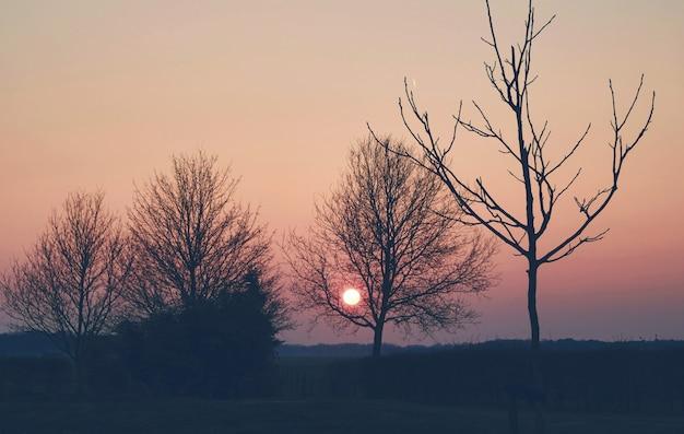 Baum in den wiesen in der landschaft am niederländischen niederländischen frühling des sonnenuntergangs Premium Fotos