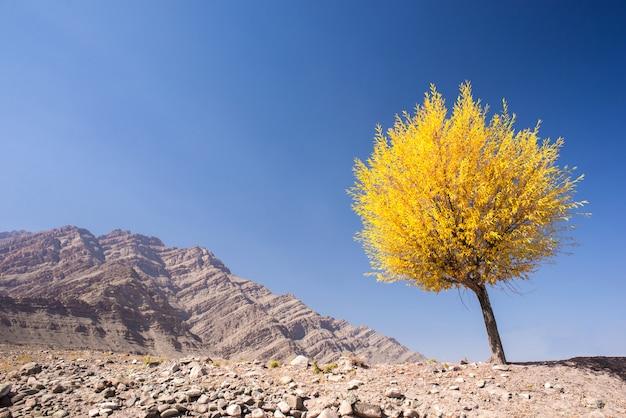 Baum mit gelben blättern in der herbstsaison Premium Fotos