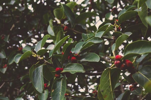 Baum mit leuchtend roten beeren Kostenlose Fotos