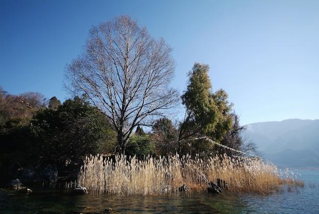 Baum ohne blätter in einem grünen wald Kostenlose Fotos
