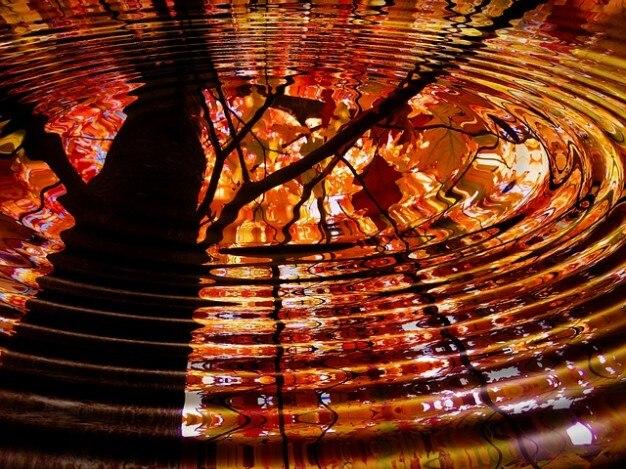 Baum Spiegel Wasser Welle Journal Spiegelung Lässt Download Der
