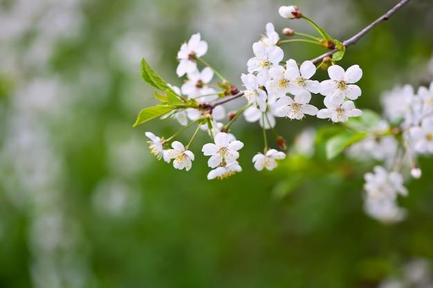 Baum zweig in voller blüte Kostenlose Fotos