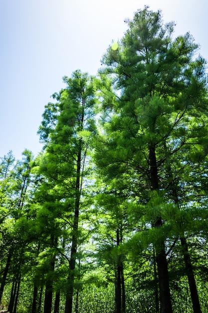 Baum Kostenlose Fotos