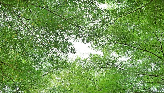 Baumblatt und -niederlassungen im garten gegen himmelhintergrund. Premium Fotos