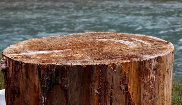 Baumoberfläche holz hintergrund Premium Fotos