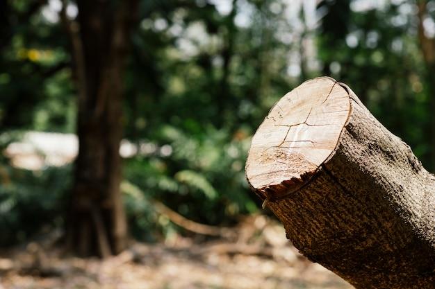 Baumschnitt natur wird zerstört Premium Fotos