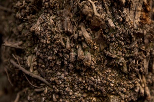 Baumstamm-beschaffenheitsabschluß oben Kostenlose Fotos