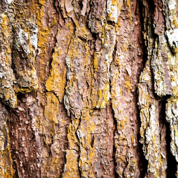 Baumstamm-beschaffenheitsnahaufnahme Kostenlose Fotos