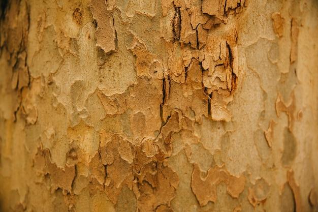 Baumstamm textur Kostenlose Fotos