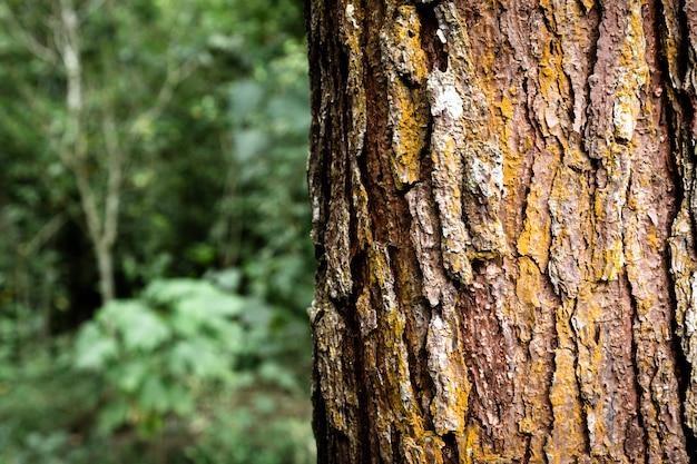 Baumstammnahaufnahme mit unscharfem hintergrund Premium Fotos