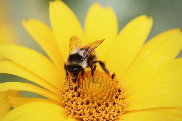 Bee sammeln Pollen Kostenlose Fotos