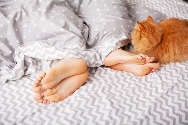 Beine von liebhabern unter decke und roter katze sitzen auf bett Premium Fotos