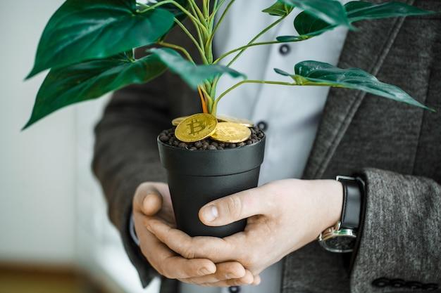 Bemannen sie das halten, zimmerpflanze mit münzen von bitcoin aus den grund Premium Fotos