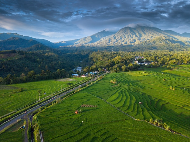 Bengkulus natürliche schönheit aus luftbildern zu der zeit in reisfeldern Premium Fotos