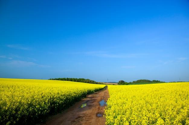 Bereich der gelben blüten Kostenlose Fotos
