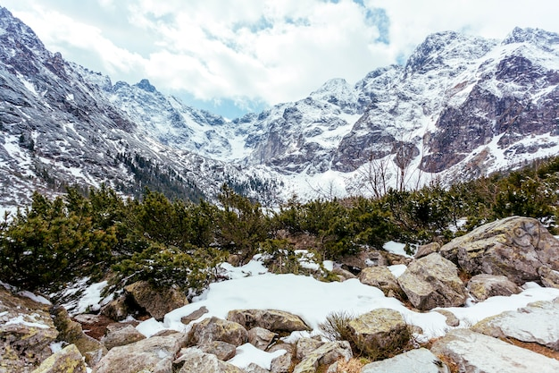Berglandschaft mit bäumen im sommer Kostenlose Fotos