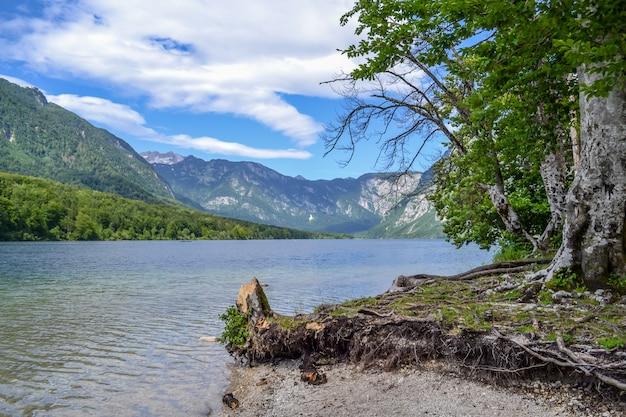 Bergsee und ufer mit stumpf und interessanten gewundenen wurzeln. Premium Fotos