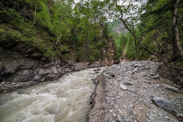 Bergwald flusslandschaft. waldfluss in den bergen. Premium Fotos