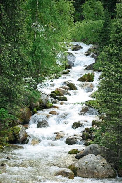 Bergwaldfluss mit steinen und grünpflanzen Premium Fotos