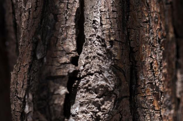 Beschaffenheit des abschlusses herauf holz Kostenlose Fotos