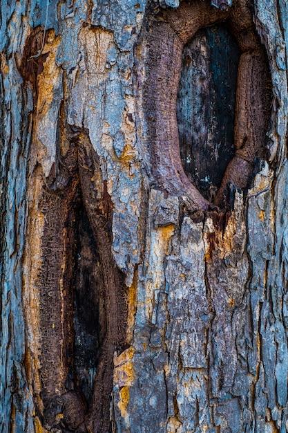 Beschaffenheit des hölzernen gebrauches der barke als natürlicher hintergrund Premium Fotos