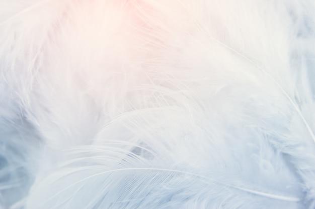 Beschaffenheitshintergrund der weißen feder Premium Fotos