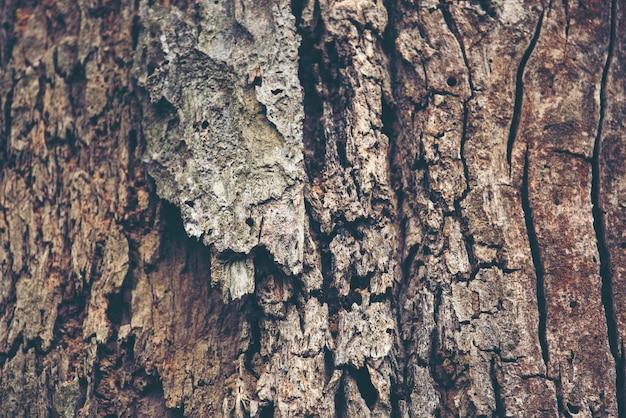 Beschaffenheitshintergrund des barkebaums Premium Fotos