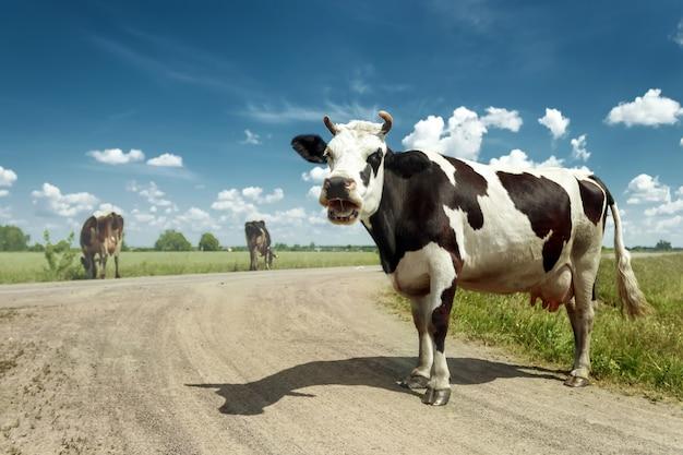 Beschmutzte kuh, die auf einer schönen grünen wiese gegen einen blauen himmel weiden lässt. Premium Fotos