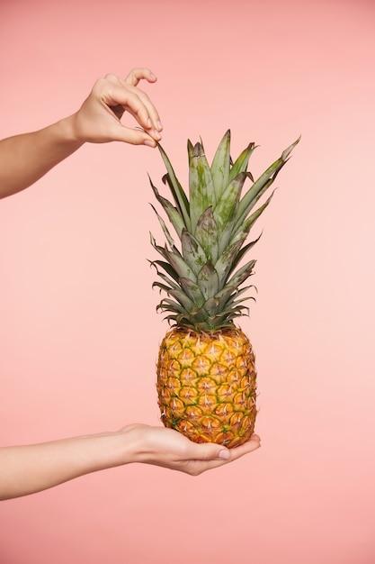 Beschnittener schuss der hand der jungen frau, die grüne blätter der frischen ananas berührt, während sie mit anderen händen hält, lokalisiert gegen rosa hintergrund Kostenlose Fotos