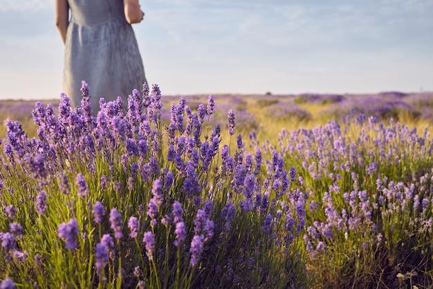 Beschnittener schuss der nicht erkennbaren frau im kleid, das in der mitte der sommerwiese unter den schönen hellvioletten lavendelblumen steht. menschen, natur. reisen, wildblumen, land und ländliche gebiete Kostenlose Fotos